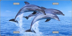 LP-1186 Dolphins License Plate - AB026