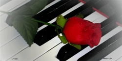 LP-1335 Piano Keys and Red Rose License Plates Tags