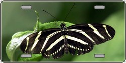 LP-2137 Butterfly Black and White Striped - Full Color Photography License Plates