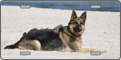 LP-2169 German Shepherd Dog Pet Novelty License Plates - Full Color Photography License Plates