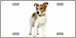 LP-2173 Jack Russell Terrier Dog Pet Novelty License Plates - Full Color Photography License Plates
