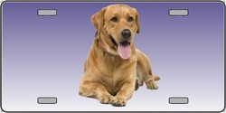 LP-2174 Yellow Labrador Retriever Dog Pet Novelty License Plates - Full Color Photography License Plates
