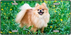 LP-2175 Pomeranian Dog Pet Novelty License Plates - Full Color Photography License Plates