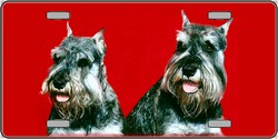 LP-2178 Schnauzer Dog Pet Novelty License Plates - Full Color Photography License Plates