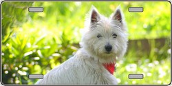 LP-2180 West Highland White Terrier Dog Pet Novelty License Plates - Full Color Photography License Plates